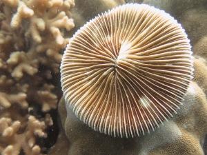snorkel - coral 1